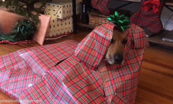 Μας κούφανε! Δείτε για ποιο λόγο τύλιξε τον σκύλο της σε συσκευασία δώρου! (vid)