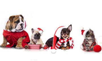 Κράτα τους μακριά, αν θέλεις να περάσεις ωραία τα Χριστούγεννα!