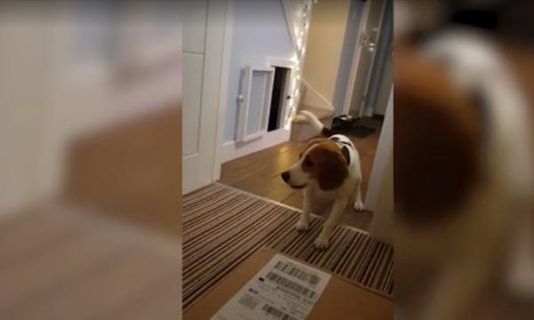 Τι είδε αυτός ο σκύλος και τρόμαξε τόσο πολύ; (vid)