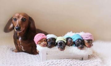 Φωτογραφίες με νεογέννητα μωρά έχετε δει! Φωτογραφίες με νεογέννητα κουτάβια όμως; (pics)
