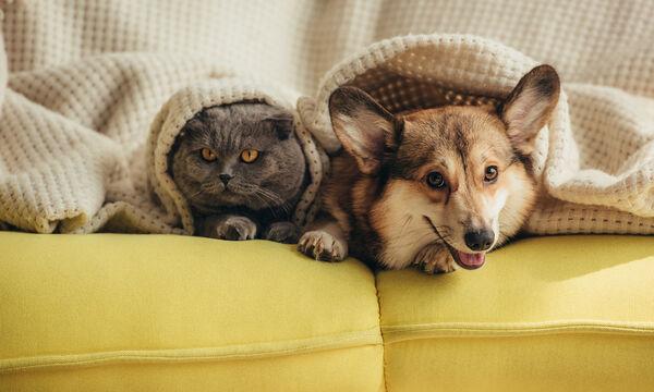 Τι κάνουν ένας σκύλος και μια γάτα μόνοι στο σπίτι; Όχι αυτό που φαντάζεστε (vid)