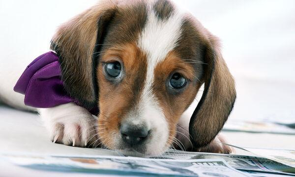 Αυτός ο σκύλος θέλει να τραβήξει την προσοχή του αφεντικού του. Δείτε τι κάνει (vid)
