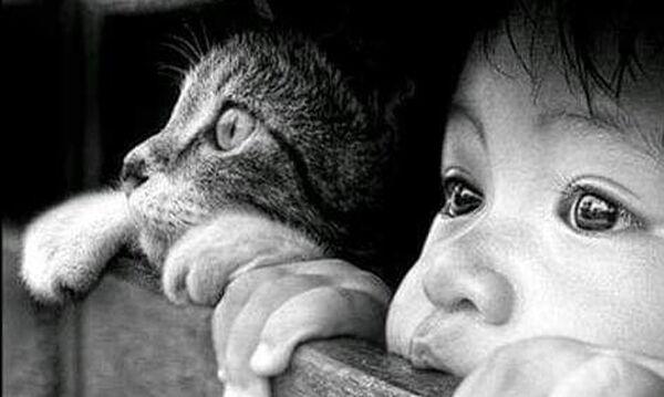 Παιδιά με τα γατάκια τους: Μια πολύτιμη σχέση μέσα από όμορφες φωτογραφίες (pics)