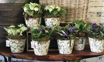 Είκοσι ιδέες για να διακοσμήσετε το σπίτι σας με μικρά φυτά εσωτερικού χώρου (pics)