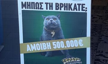 Κυνήγι σε όλη την Ελλάδα για μία γάτα με αμοιβή 500.000 ευρώ