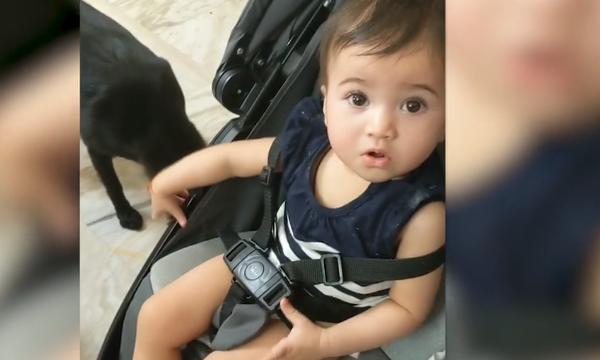 Αυτό που έκανε ο σκύλος η μικρούλα δεν μπορούσε να το πιστέψει – Δείτε την αντίδρασή της (vid)