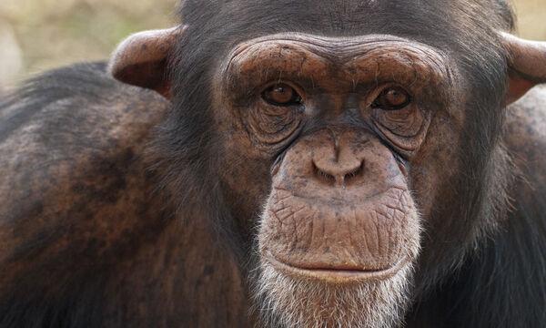 Αττικό Ζωολογικό Πάρκο: Μοναδικές εμπειρίες για όλη την οικογένεια