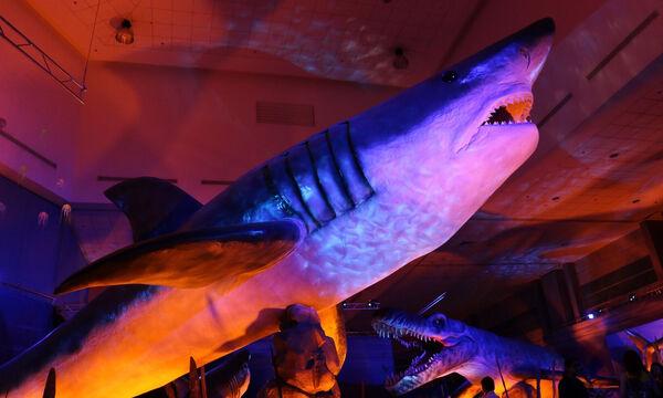Η έκθεση «Δεινόσαυροι και τέρατα των θαλασσών» από τις 8 Μαΐου στον Ελληνικό Κόσμο