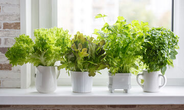 Ποια βότανα μπορούν να σας βοηθήσουν να χάσετε βάρος (vid)