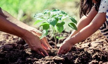 Προϋπόθεση για ν' αποφοιτήσεις από ένα σχολείο στις Φιλιππίνες είναι να έχεις φυτέψει 10 δέντρα!