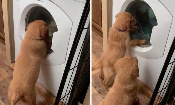 Πόση διασκέδαση μπορεί να προσφέρει ένα πλυντήριο ρούχων σε... λειτουργία; (vid)