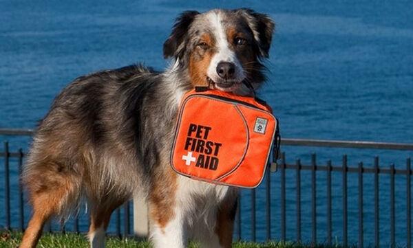 Οκτώ πράγματα που πρέπει να έχουμε στην τσάντα του σκύλου μας για την παραλία