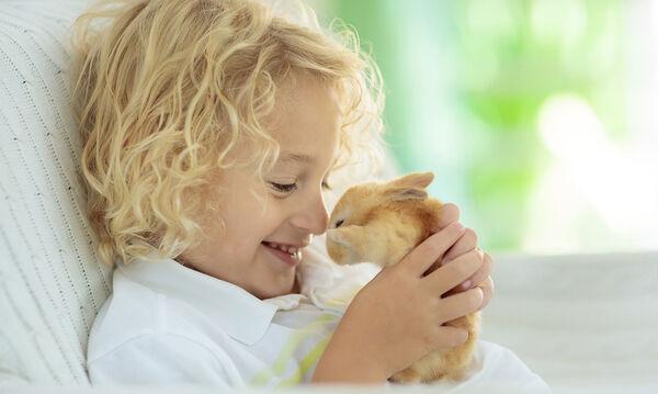 Τι δεν πρέπει να δίνει το παιδί σας στο κουνέλι του για φαγητό;