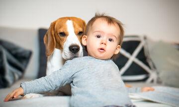 Είναι έγκυος το σκυλάκι σας; Όλα όσα πρέπει να γνωρίζετε σαν οικογένεια