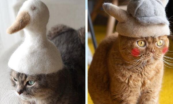 Αυτές οι γάτες έχουν ξετρελάνει το διαδίκτυο με τα καπέλα τους! (pics)