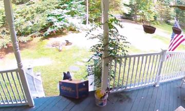 Δείτε πόσο επιδέξια κλέβει το αρκουδάκι ένα κουτί από το μπαλκόνι (vid)