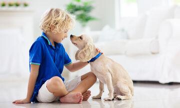 Επέμβαση καταρράκτη σε σκύλο - Όλα όσα πρέπει να γνωρίζετε όλοι στην οικογένεια