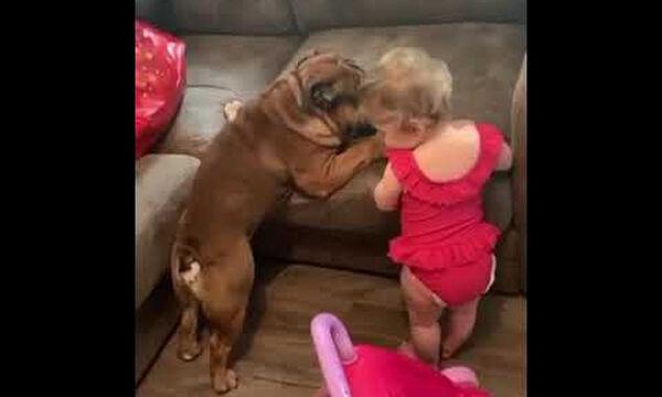 Σκύλος vs Μωρό: Ποιος θα καταφέρει να ανέβει στον καναπέ; (vid)