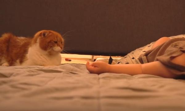 Τόσο τρυφερό! Δείτε τι κάνει η γάτα όταν το μωρό κοιμάται (vid)