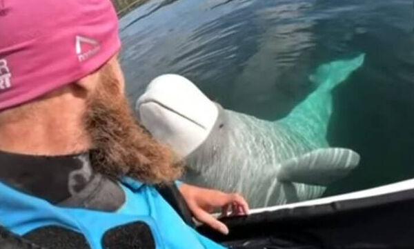 Viral βίντεο με φάλαινα - μπελούγκα που έκλεψε κάμερα δύτη και μετά την… επέστρεψε