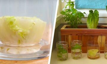 Δείτε πώς μπορείτε να καλλιεργήσετε λαχανικά στο μπαλκόνι ή την κουζίνα σας (vid)