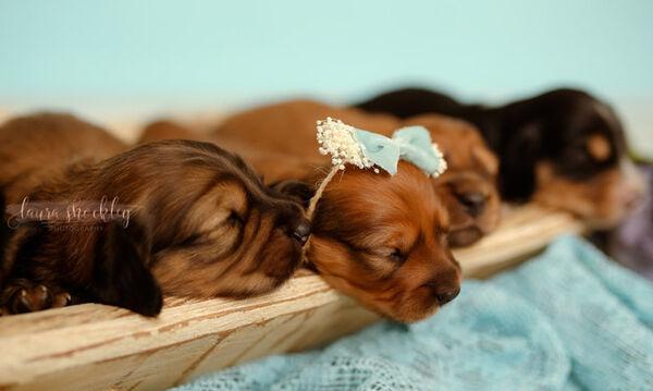 Η ωραιότερη φωτογράφηση με νεογέννητα κουτάβια (pics)