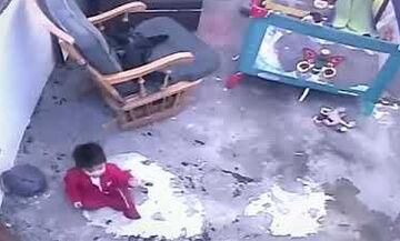 To βίντεο που έγινε viral: Γάτα ορμά σε μωρό για να το σώσει  (vid)