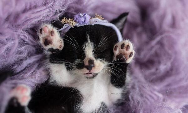 Αυτές οι φωτογραφίες με νεογέννητα γατάκια θα σας κάνουν να λιώσετε (pics)