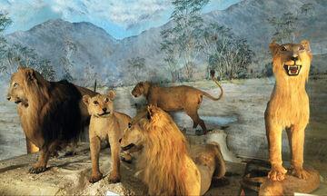 Ανοικτό την Κυριακή το Μουσείο Ζωολογίας του Πανεπιστημίου Αθηνών