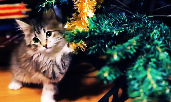 Όταν οι γάτες δεν μπορούν να αντισταθούν στο χριστουγεννιάτικο δέντρο (vid)