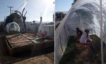Ένα αλλιώτικο σχολείο της Κρήτης - Πώς ένας λαχανόκηπος συμβάλλει στην εκπαίδευση των παιδιών (pics)