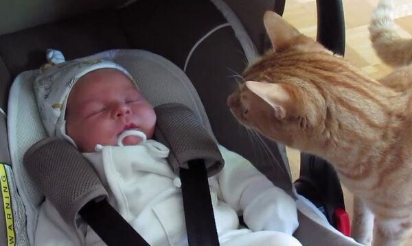 Όταν οι γάτες συναντούν για πρώτη φορά νεογέννητα - Ξεκαρδιστικό βίντεο (vid)