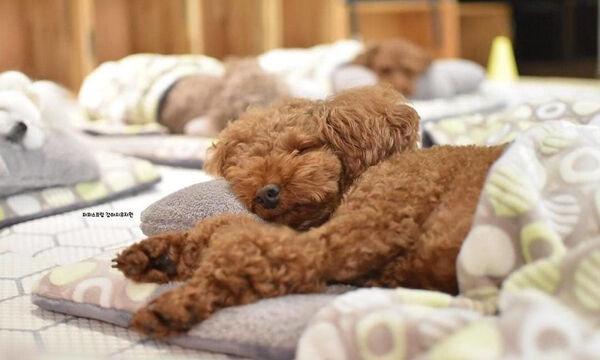 Ο φωτογραφικός φακός απαθανατίζει κουτάβια να κοιμούνται & γίνονται viral (pics)