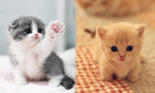 Αυτά τα γατάκια είναι ό,τι πιο γλυκό είδαμε αυτή την εβδομάδα (vid)