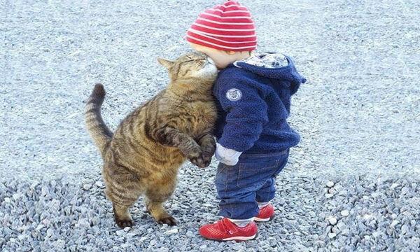 Αυτές οι γάτες έχουν παραδοθεί στα χάδια των παιδιών (vid)