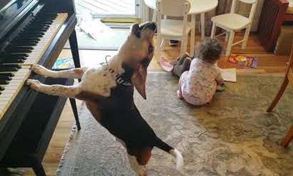 Viral βίντεο: Κοριτσάκι χορεύει ακούγοντας μουσική που παίζει ο σκύλος του στο πιάνο (pics+vid)