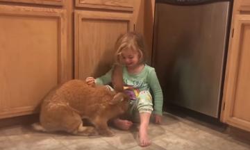 Ο καλύτερος φίλος ενός μικρού κοριτσιού είναι ένα γιγάντιο κουνέλι - Το βίντεο που έγινε viral (vid)