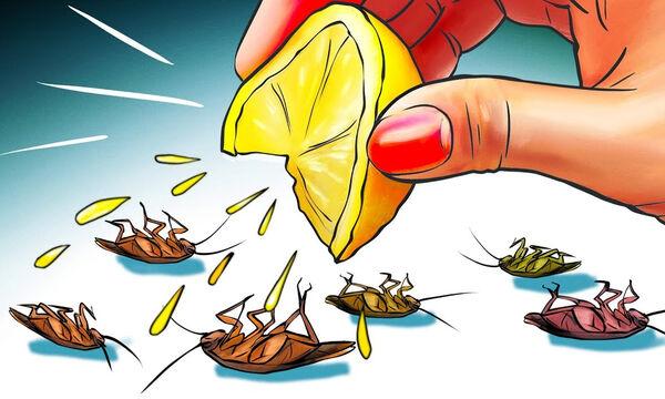 Δώδεκα φυσικοί τρόποι για να απαλλαγείτε από τις κατσαρίδες στο σπίτι (vid)