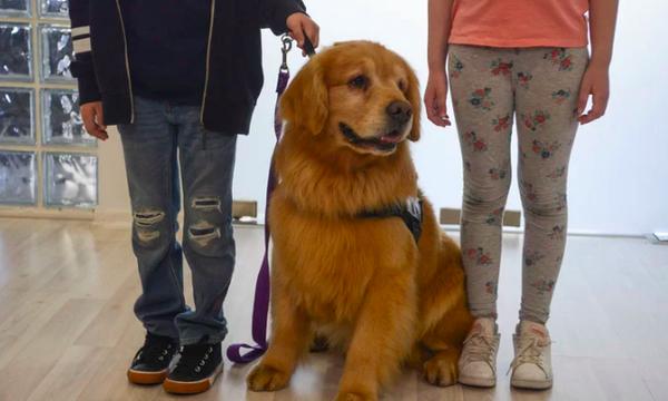 Τιτάν:Ο σκύλος που βοηθά παιδιά να μειώσουν το συναισθηματικό στρες που νιώθουν μετά την κακοποίηση