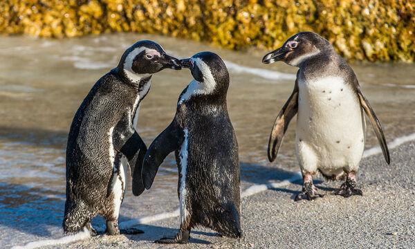 Αυτό το viral βίντεο με τους πιγκουίνους είναι ό,τι χρειαζόμασταν για να φτιάξει η μέρα μας
