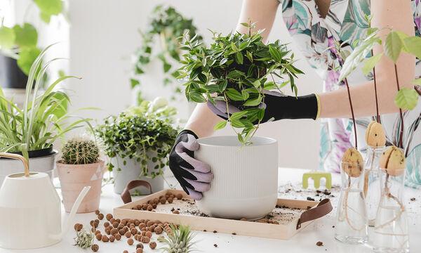 # Μένουμε _ σπίτι: Απλοί τρόποι να διακοσμήσετε το σπίτι με φυτά (vid)