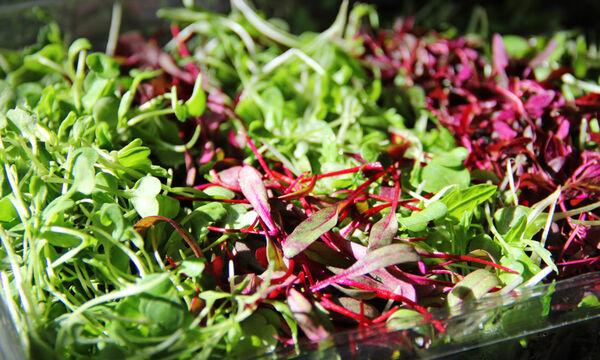 Φυλλώδη λαχανικά: Είδη και διατροφική αξία (εικόνες)