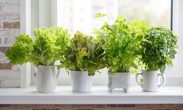 #Μένουμε_Σπίτι: 10 αρωματικά φυτά μαγειρικής που μπορείτε να καλλιεργήσετε στην κουζίνα σας (vid)