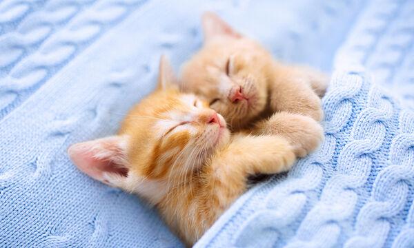 Υπέροχο! Αυτό το απολαυστικό βίντεο με μωρά γατάκια αξίζει να το δείτε (vid)