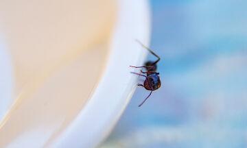 Μυρμήγκια στο σπίτι; Δεκαπέντε φυσικοί τρόποι για να τα εξαφανίσετε (vid)
