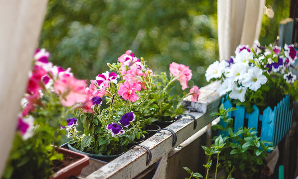 Ξεράθηκαν τα φυτά σας από τη ζέστη; Δείτε πώς θα τα «σώσετε» (pics)