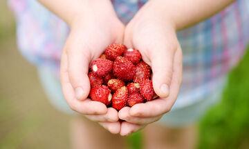 Οι φράουλες στη διατροφή των παιδιών: Τέσσερα οφέλη και δύο συνταγές για λαχταριστά σνακ (vids)