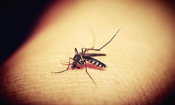 Αυτό είναι το μυστικό για να μην σε πλησιάζουν τα κουνούπια (photos)