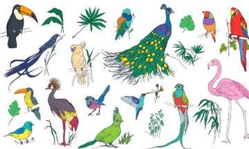 Βρες το πτηνό που αντιστοιχεί στο μήνα γέννησής σου και μάθε τι αποκαλύπτει για σένα