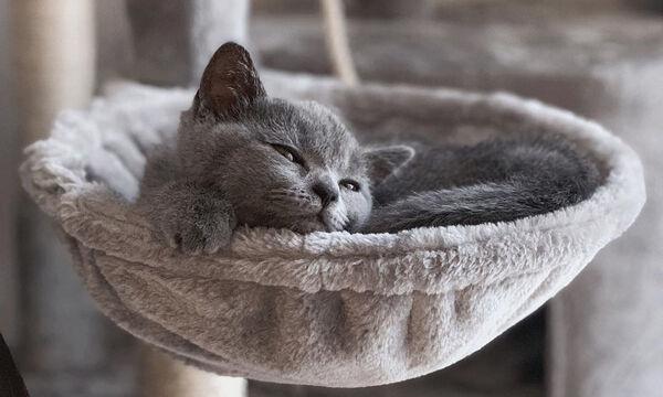 Αυτή η γκρι γάτα έχει τρελάνει το διαδίκτυο (pics)